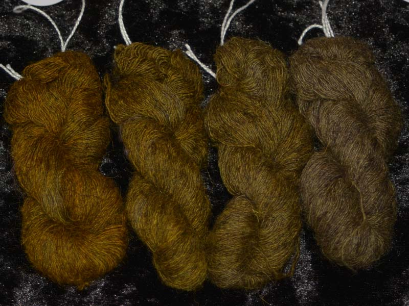 Dazzling Dandelion (Grijze basis/grey base)